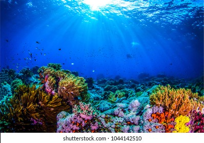 Underwater world panorama. Coral reef ocean light under water