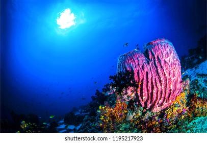 Underwater world panorama. Underwater light rays view. Underwater sea sponge scene. Sea sponge underwater view