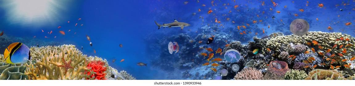 Underwater world - panorama. Red Sea, Egypt
