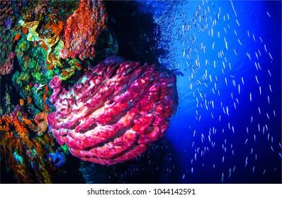 Underwater world panoramic landscape