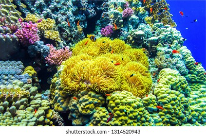 Underwater world scene. Beautiful underwater world view. Underwater coral fishes view. Underwater coral fish shoal scene