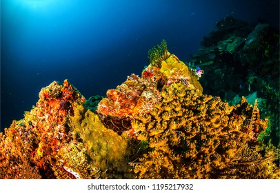 Underwater world scene. Underwater world coral fish view. Underwater coral fish scene. Underwater world coral view