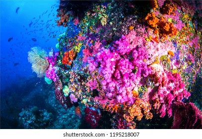 Underwater world scene. Pink coral reef underwater. Underwater life view. Beautiful underwater scene
