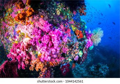 Underwater world scenic