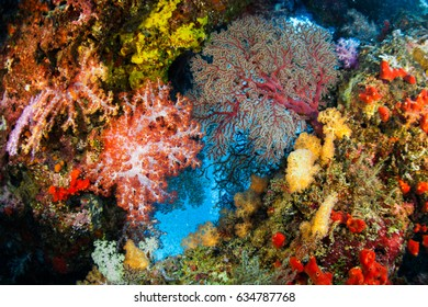 Underwater world of Similan Island , Soft coral colony spong and Gorgonian is vivid color, Similan island, Thailand.