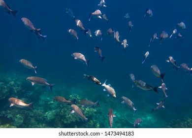 Underwater world of Surin and Similan Islands. Andaman Sea on the border of Thailand and Myanmar. Coral reefs, schools of fish. One of the most famous and beautiful world places for diving and snorkel