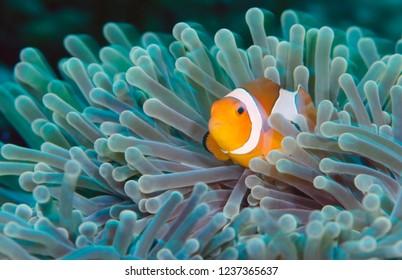 Underwater world of tropical seas
