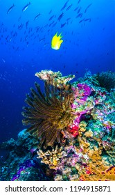 Underwater world view. Underwater world coral fishes scene. Underwater world coral fish shoal. Underwater life scene
