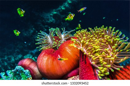 Underwater world view. Underwater macro world. Underwater life scene. Underwater view