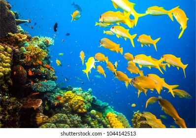 Underwater yellow fish shoal landscape