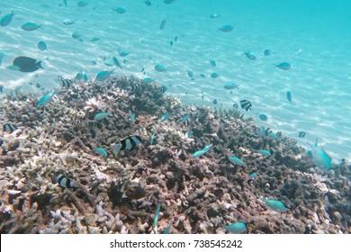 Underwater at Ypao Beach Park, Tumon bay, Guam island