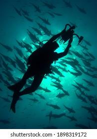 Undewater modeling.  Photographer taking shots of fish