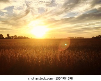 An unedited picture of a bean field during golden hour