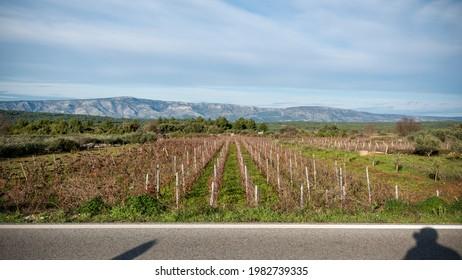 UNESCO heritage of Ancient Greek cropland in Stari Grad - Shutterstock ID 1982739335