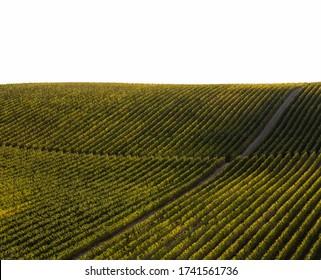 UNESCO Weltkulturerbe, das Douro Tal schöne endlose Linien von Weinbergen, in Sao Joao da Pesqueira, Viseu, Portugal.
