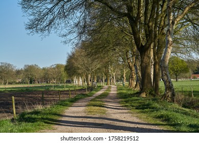 unfixed rural lane in the district Wesermarsch (Germany) going through the fields with some big trees next to it on a sunny spring day