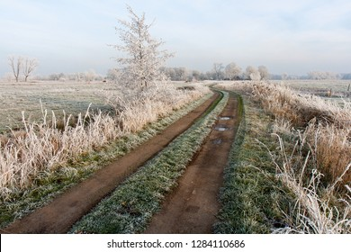 unfixed rural path in the middle of meadows and a small tree covered with beautiful hoar frost on a misty winter day in the district Wesermarsch, Germany