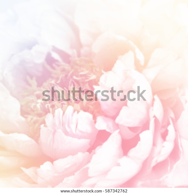 Unfocused blur peony petals, abstract romance background, pastel and soft flower card