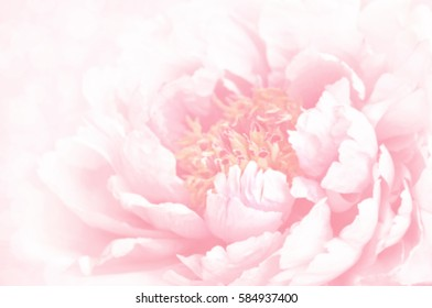 Unfocused blur peony petals, toned, light and heart bokeh background, pastel and soft card