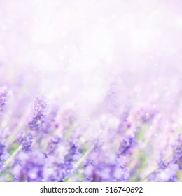 Unfocused blur summer blossoming lavender background, toned, light and heart bokeh background, pastel and soft card
