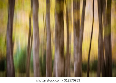 Unfocused forest in brown and green
