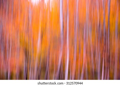 unfocused forest in orange and yellow
