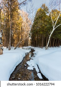 Unfrozen river in a frozen winter background in a boreal forest, Quebec, Canada.