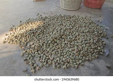 Unhulled cashew nut background in thailand