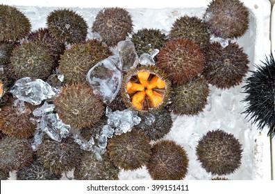 Uni roe or sea urchin roe at Hakodate Morning Market, Hokkaido, Japan