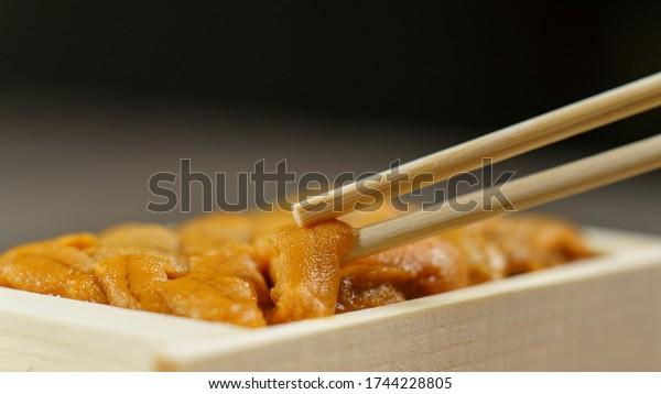 Uni sushi in chopsticks. Sea urchin(uni sashimi) ,Japanese food.