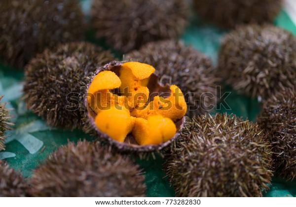 Uni Urchin Sashimi fresh seafood from Japan