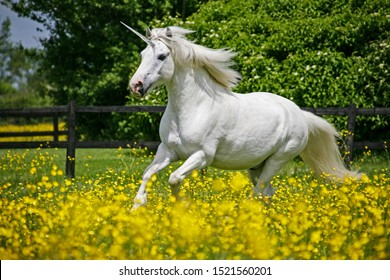A unicorn canters through a field of buttercups