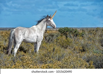 Unicorn Real white horn horse close up