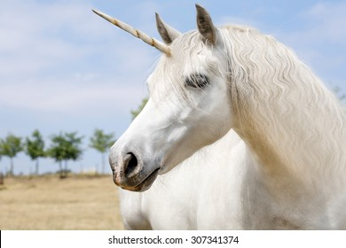 Unicorn realistic photography