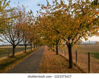 Unidentifiable people waling in an alley in autumn park with colorful foliage