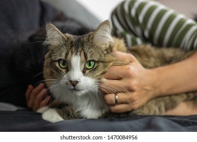 An unidentifiable woman lies in bed while caressing a tabby cat