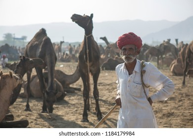 unidentified camel trader with camels  in pushkar camel fair 2017 in pushkar, rajasthan, india  on 25 october 2017