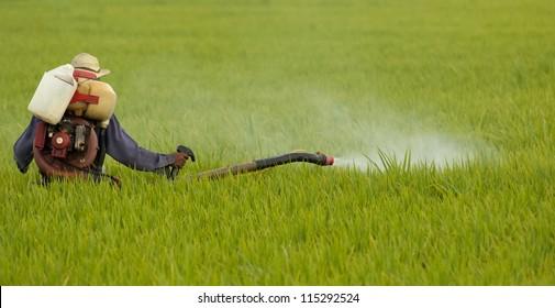 Unidentified farmer spraying chemical on a paddy field in Sekinchan, Malaysia