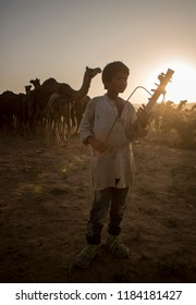 unidentified musician with camels  in pushkar camel fair 2017 in pushkar, rajasthan, india  on 25 october 2017