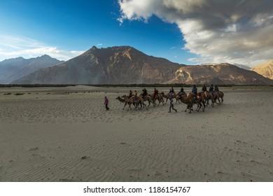 unidentified persons enjoying camel safari in nubra valley, ladakh, jammu and kashmir, india on 17 june 2018