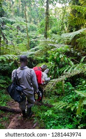 Unidentified tourists on gorilla trekking in the African rainforest in Bwindi Impenetrable Forest National Park, at the borders of Uganda, Congo and Rwanda, circa October 2012