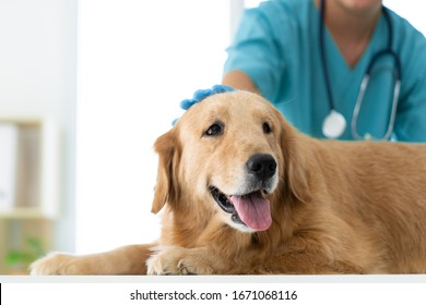Unidentified veterinarian is gently petting the dog's head while examination in the veterinary clinic. Concept of medical and healthcare for pet animal.