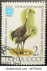 UNION OF SOVIET SOCIALIST REPUBLICS - CIRCA 1982: A 2 kopec stamp from the USSR (Scott 2008 catalog number 5050) shows image of a Hooded crane (Grus monacha), from the rare birds series, circa 1982