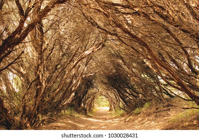 Unique australian bush, Bushrangers Bay, Mornington Peninsula, Australia
