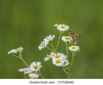 Unique butterfly on white flower