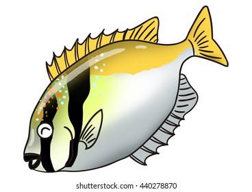 Unique fish illustrations