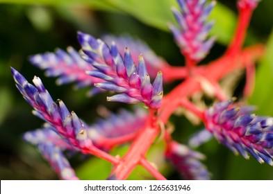 Unique flowers in Sydney botanical gardens