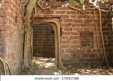 Unique frame, where a door frame of a ruined house is supported by a thick root of Ficus tree. The root has taken  shape of door frame. Brickwork and scattered dry leaves create enigmatic ambience.