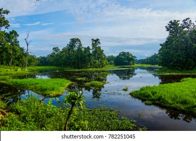 unique jungle landscape in the chitwan national park in nepal with a lake in the middle of the jungle, photographed on a clear day with great green colors of the grassland and the trees