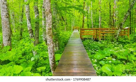 Unique National Park in Montenegro - Biogradska Gora - Shutterstock ID 1769908487